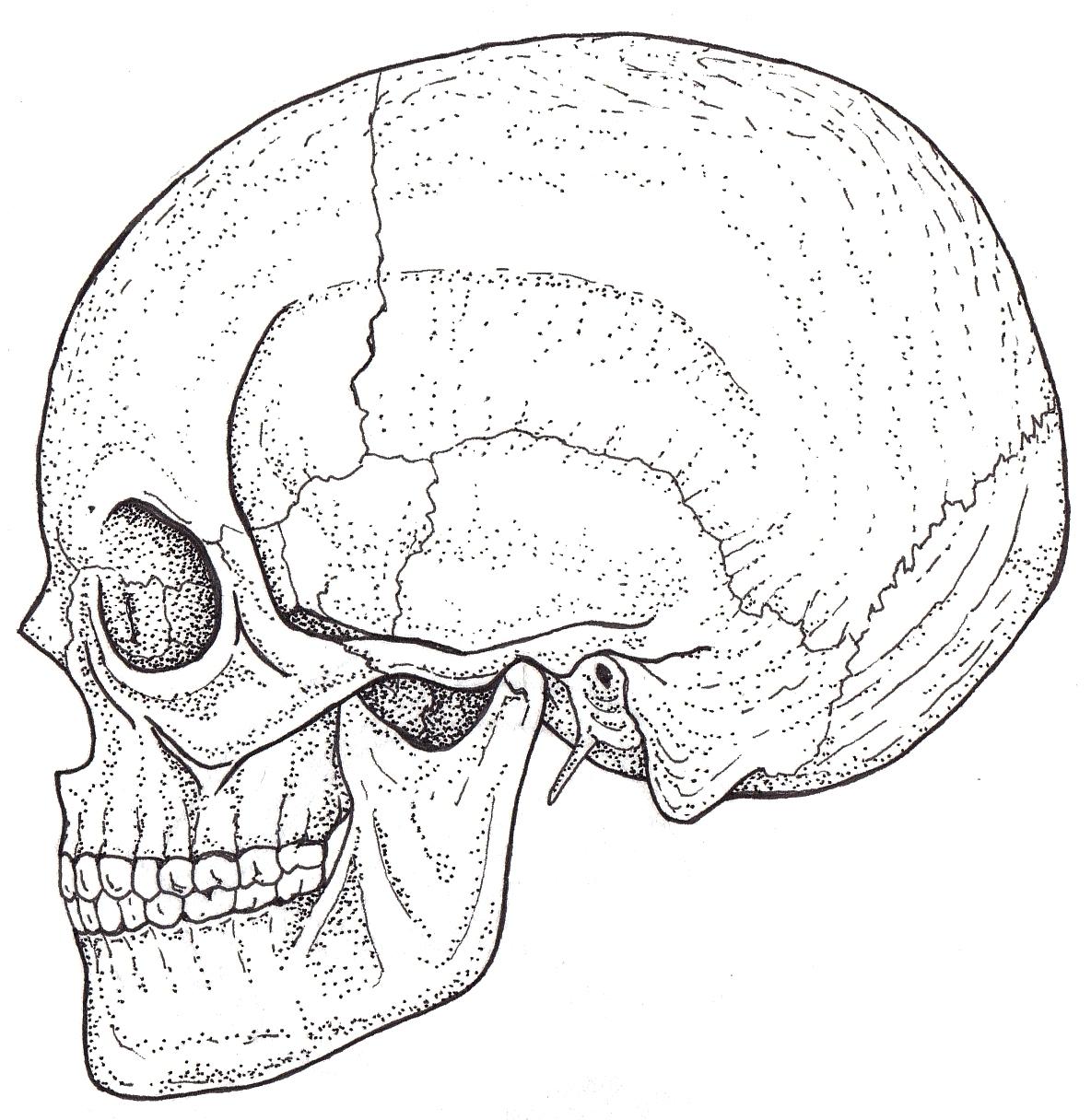 1184x1216 Fileskull.black White Illustration.jpg