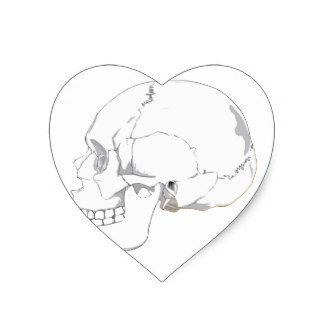 324x324 Human Skull Drawing Stickers Zazzle