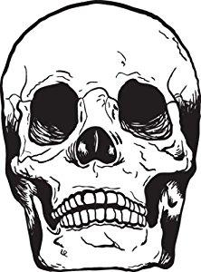 222x300 Vinyl Wall Art Decal Sticker Human Skull Bones Automotive