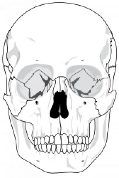 420x626 Human Skull