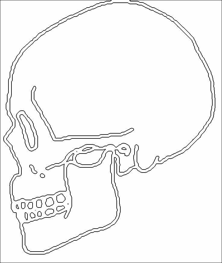 736x872 Human Skull