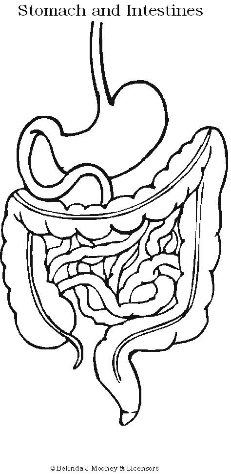 474x972 Digestive System Human Body Unit Human Body, Body