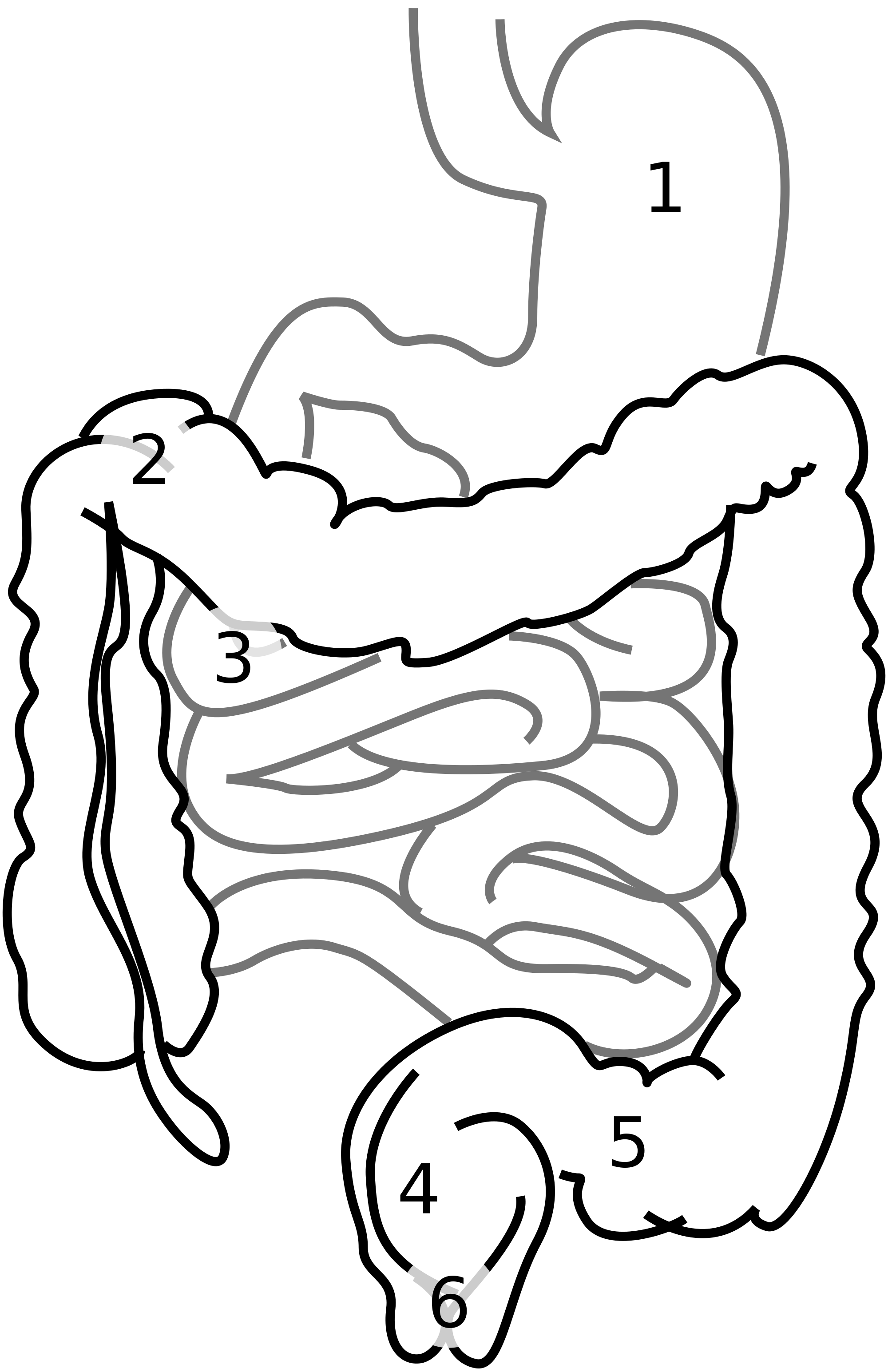 2000x3090 Fileintestine Diagram Num.svg