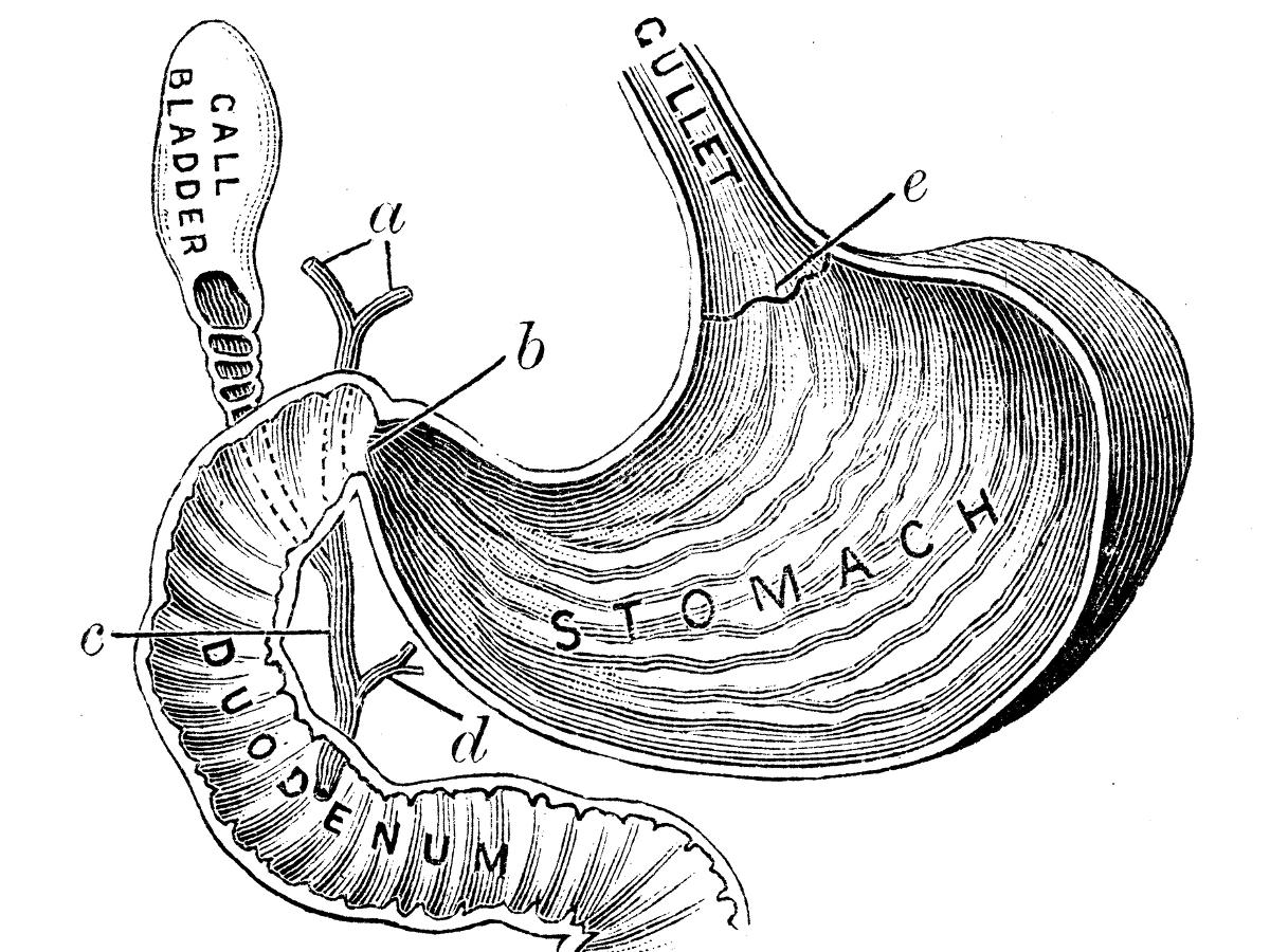 1200x900 Internal Human Organs