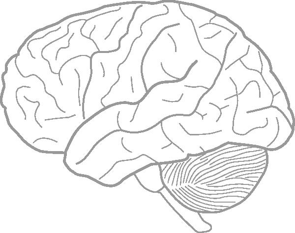 600x475 Brain Drawing Template Brain Drawing Te