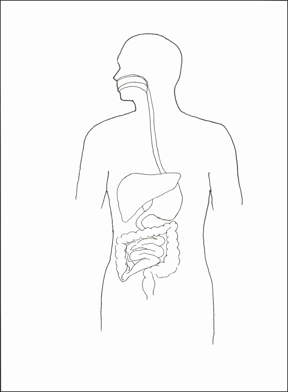 1224x1667 15 Outline Of A Human Body Printable Besttemplates