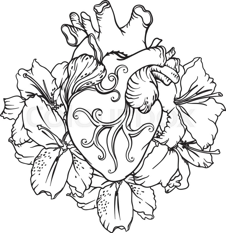 777x800 Stylized Anatomical Human Heart Drawing. Heart With White Lilies