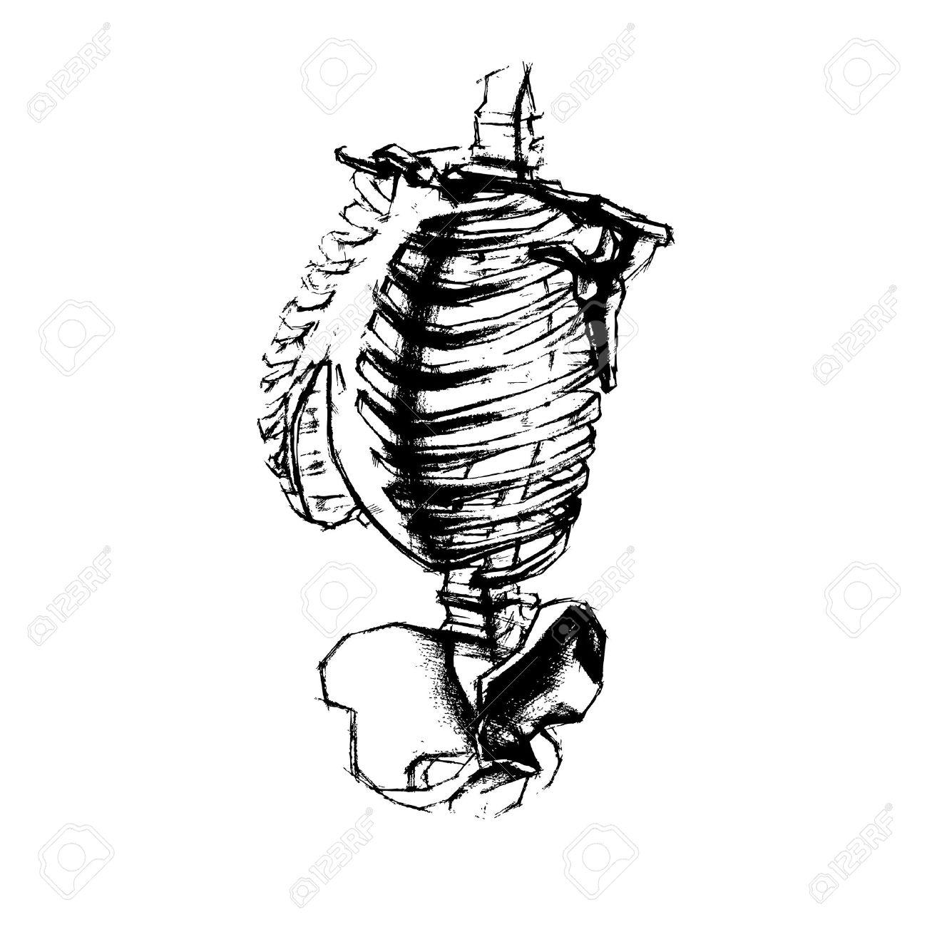 1300x1300 Illustration Of Academic Drawing Human Torso. Vector Royalty Free