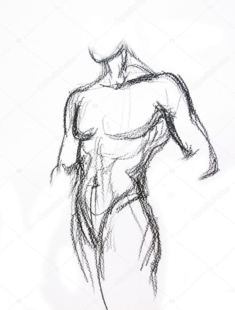 775x1023 Man Torso Sketch Stock Photo Valenty