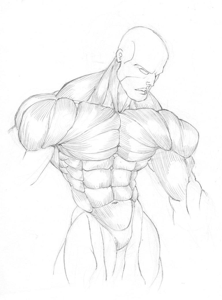 770x1038 Anatomy Study Torso By Gavinmichelli