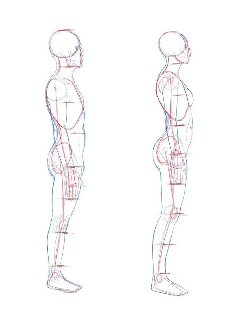 774x1032 Human Body Profile Picture Drawn Profile Side View
