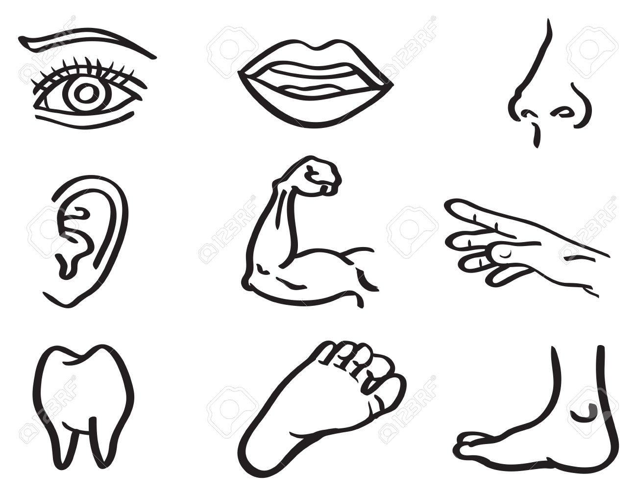 1300x1012 Draw The Part Of Human Body Parts Of Human Body Drawing Human