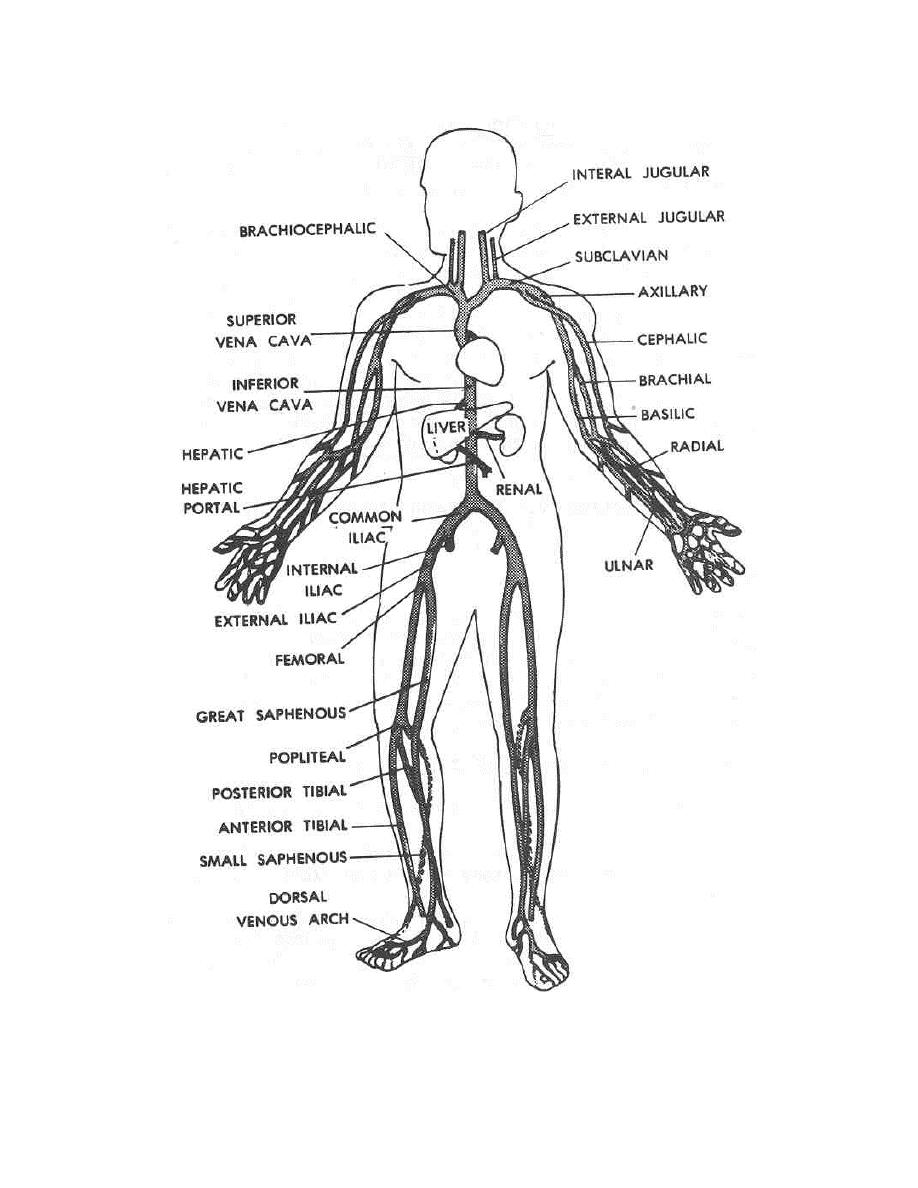 918x1188 Figure 2 6. Main Veins Of The Human Body.