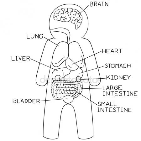 450x450 My Body, Educational Info Graphic Chart For Kids Showing Parts