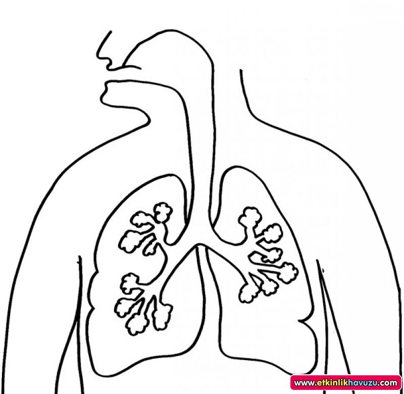 800x779 Human Body Coloring Pages Details