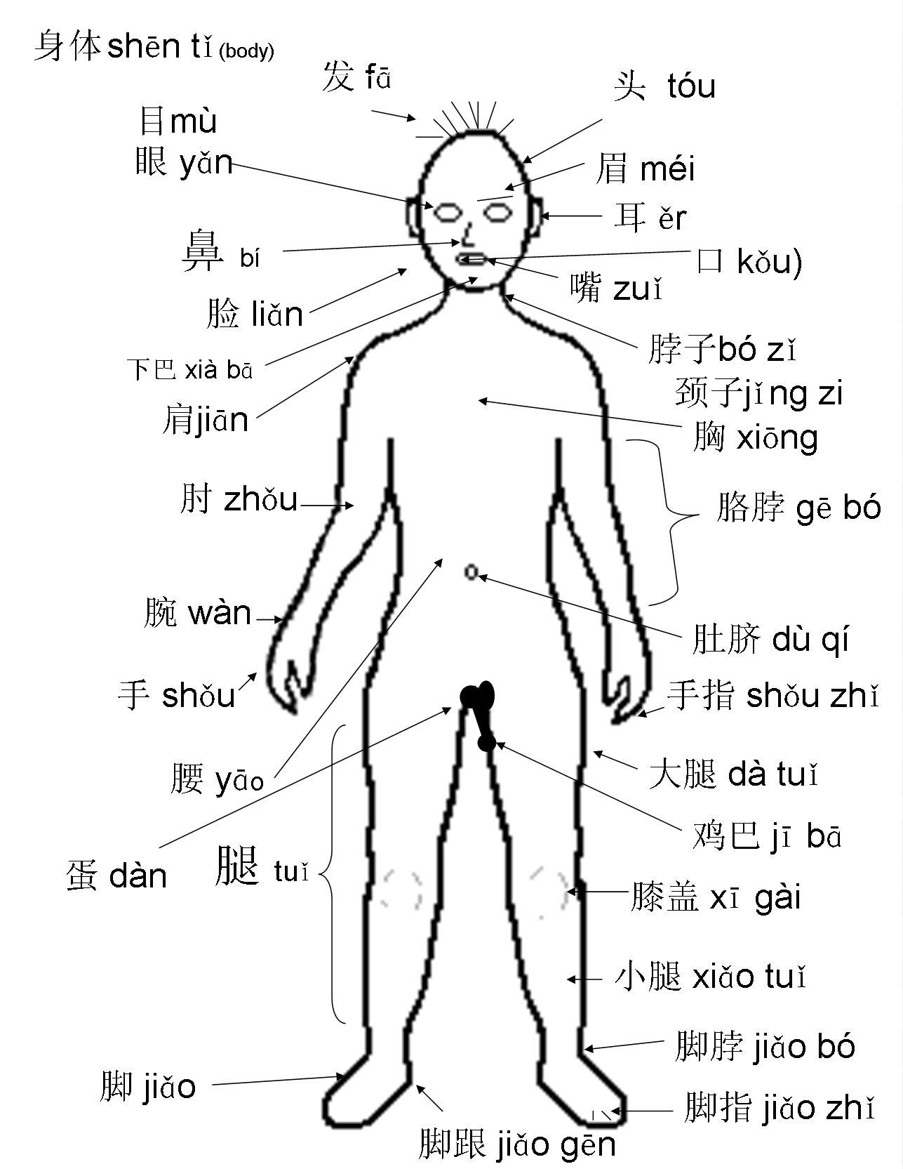 1287x1665 The Human Body Labeled In Spanish