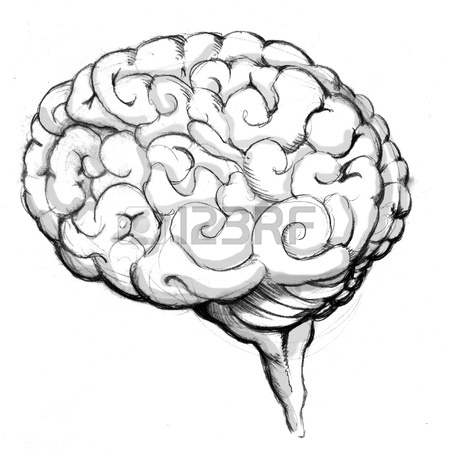 450x450 An Image Of A Human Brain Drawing. Stock Photo, Picture