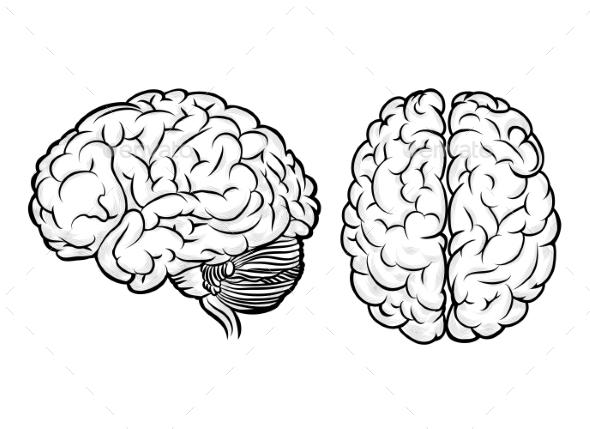 590x429 Human Brain Brain, Font Logo And Fonts