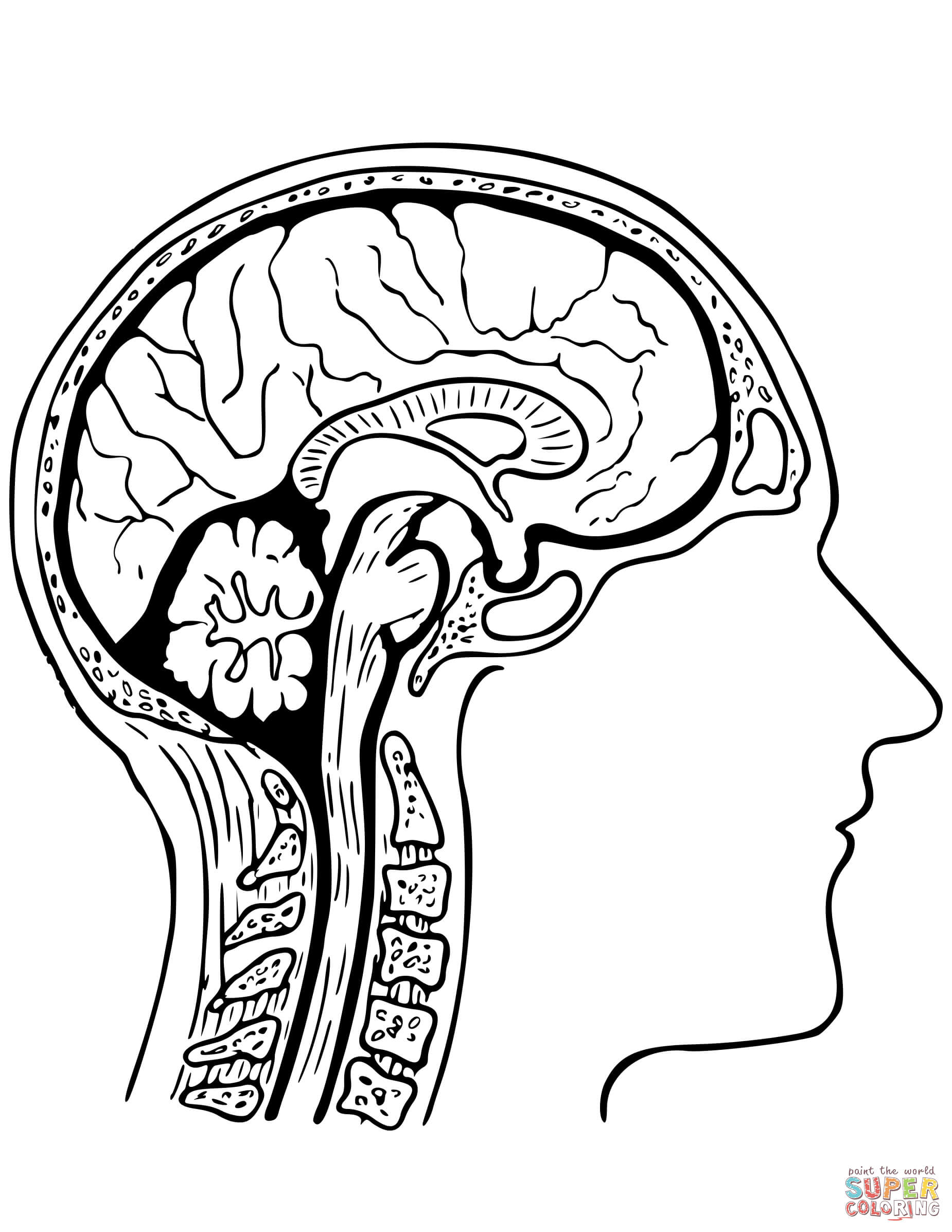 1850x2394 Human Brain Coloring Page Free Printable Coloring Pages