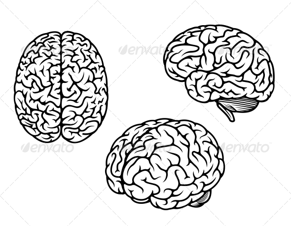 590x458 Human Brain In Three Planes Medical Design, Font Logo And Graphics