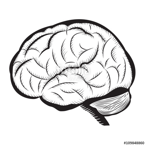 500x500 Black And White Brain Illustration Human Brain Outline Draw