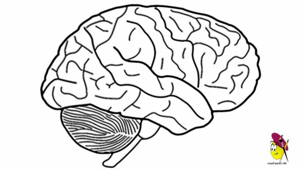 1024x576 Photos Simple Brain Drawing,