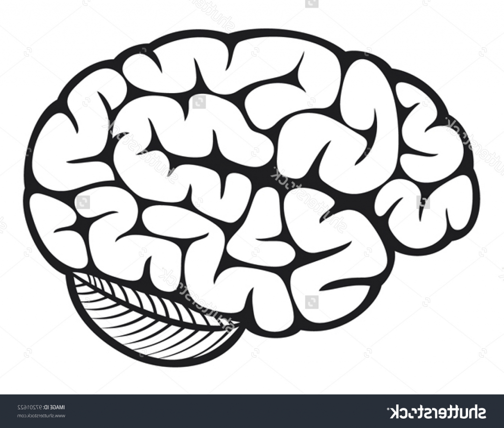 1024x869 Simple Brain Sketch Simple Brain Drawing The Human Brain Stock
