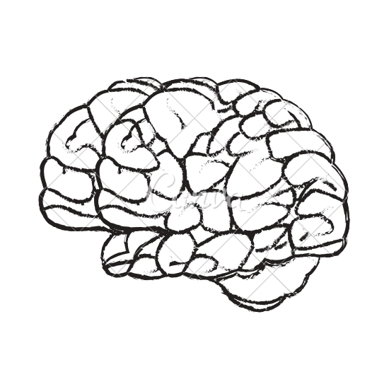 550x550 Sketch Of A Human Brain Organ Vector Icon Illustration