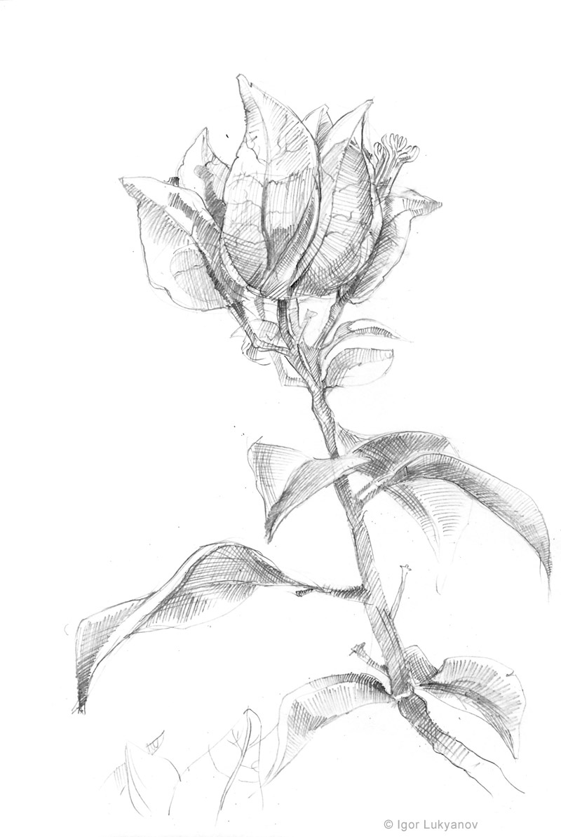 800x1193 Drawing Sketch A Day By Igor Lukyanov September 2010 Drawing