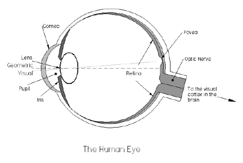 850x573 Diagram Of The Cross Section Through A Human Eye.