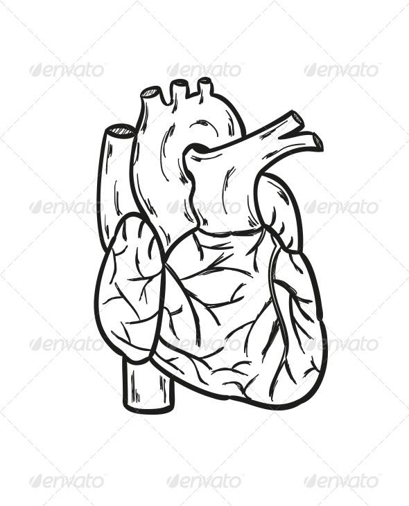 590x731 Human Heart By Muuraa Graphicriver