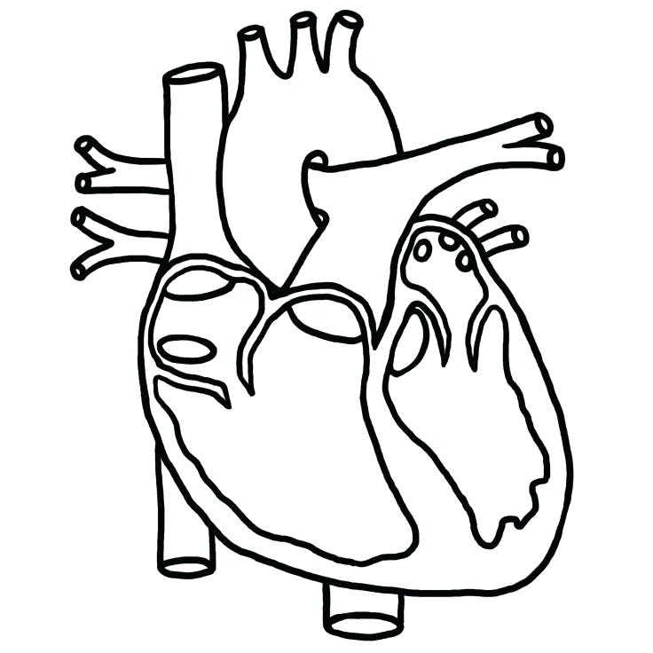 736x736 Heart Anatomy Coloring Pages Human Heart Coloring Pages How