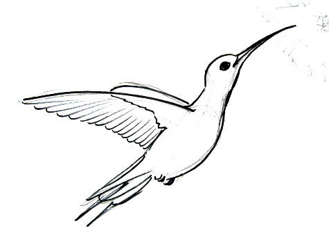 475x356 How To Draw A Hummingbird