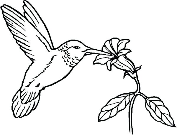 600x460 Hummingbird Coloring Page Humming Birds Coloring For Kids Swallow