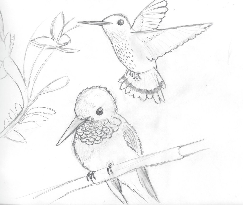 1024x865 Hummingbird Sketches By Elithedinoguy
