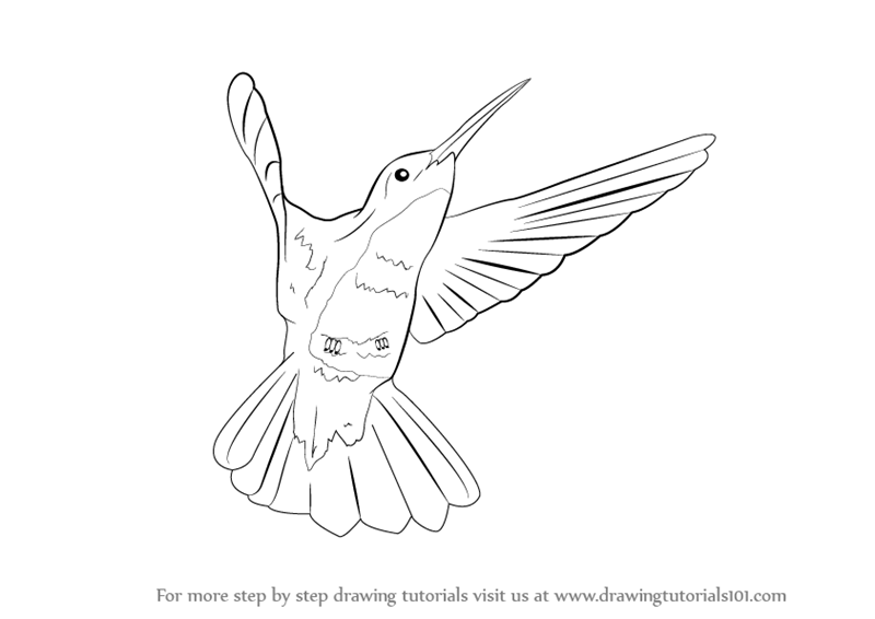 800x566 Learn How To Draw A Hummingbird (Birds) Step By Step Drawing