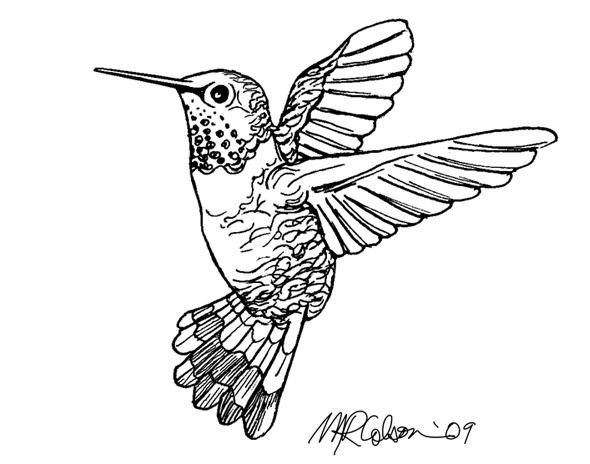 590x464 Print Of The Week The Hummingbird Melissa Colson