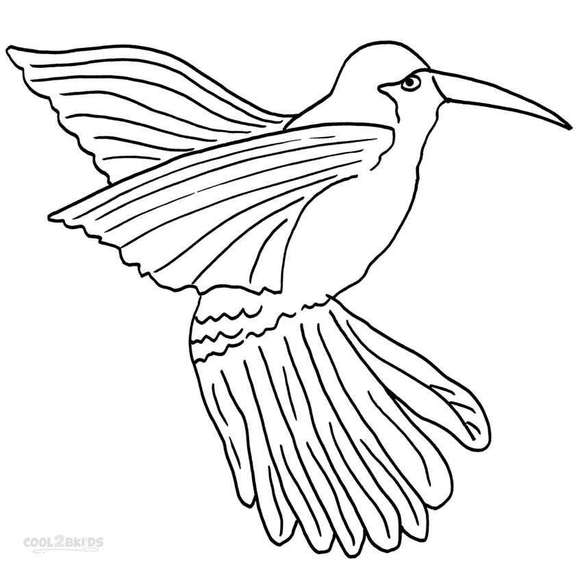 850x825 Printable Hummingbird Coloring Pages For Kids Cool2bkids
