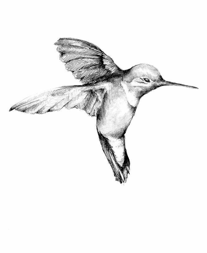 667x814 Realism, Black White And Gray, Drawing, Hummingbird Tattoo