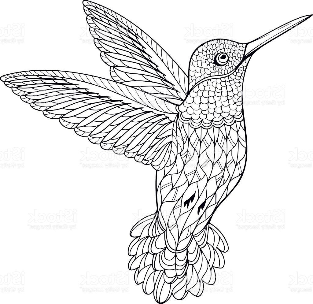 1024x994 Top Coloring Page Hummingbird Vector Pictures