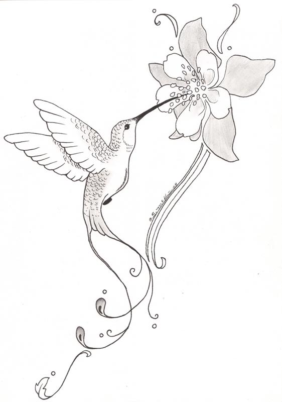 562x800 Hummingbird And Flower Pencil Drawing