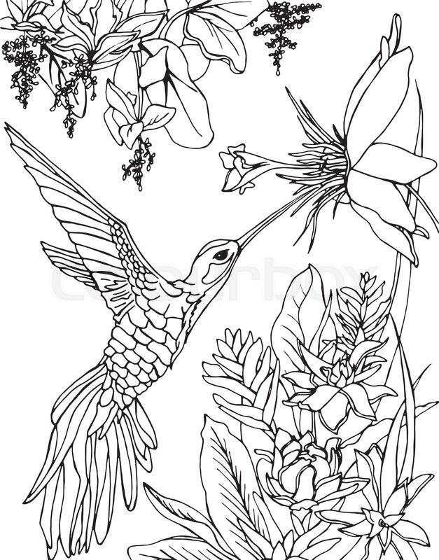 627x800 Flying Hummingbird. Hummingbird And Flowers. Stylized Bird