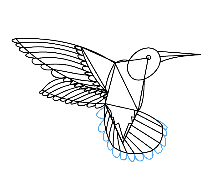 678x600 How To Draw A Hummingbird And Flower 38483