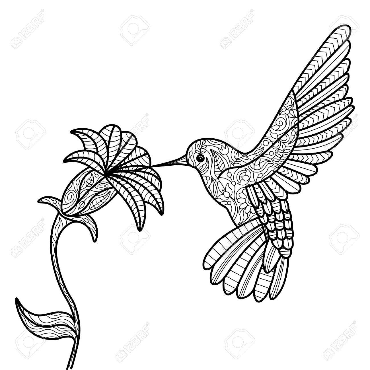 1300x1300 Hummingbird And Flower Coloring Book For Adults Vector