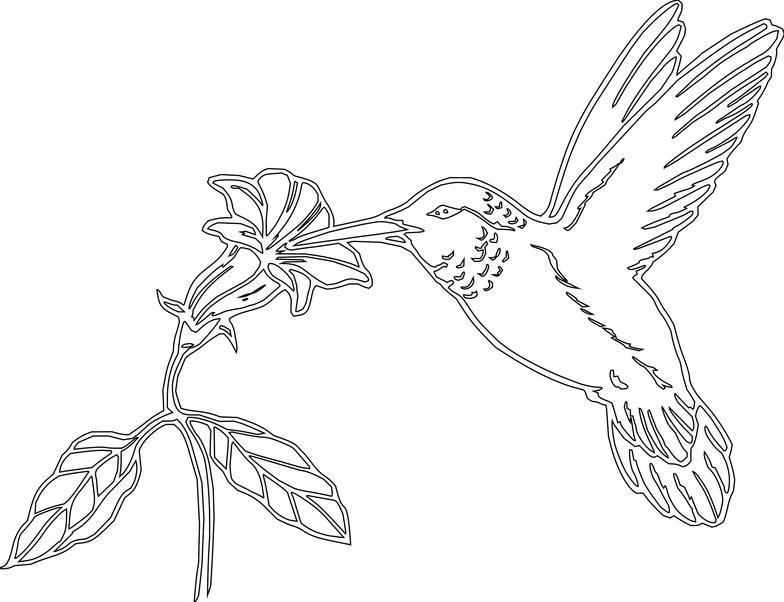 784x602 Hummingbird Clipart Black And White