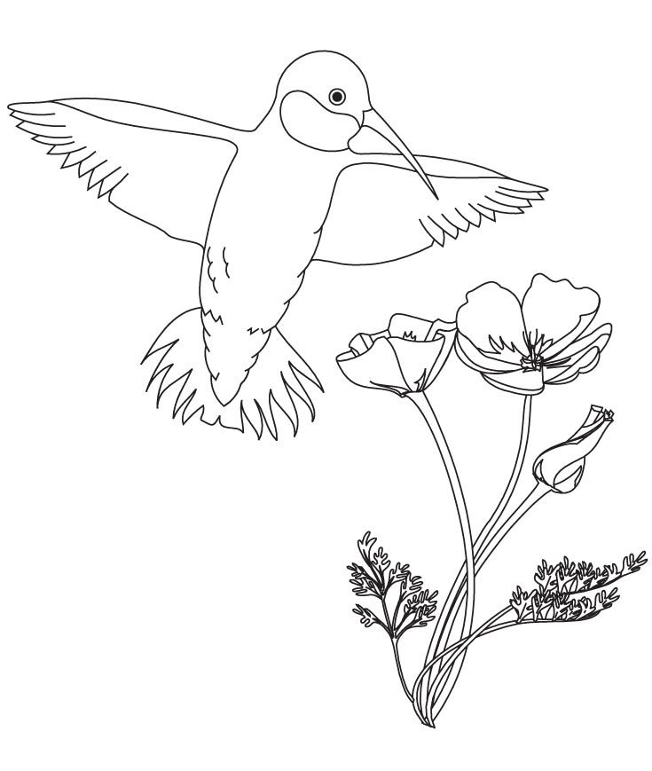 735x869 Hummingbird With Flower Coloring Pages Download Free Hummingbird