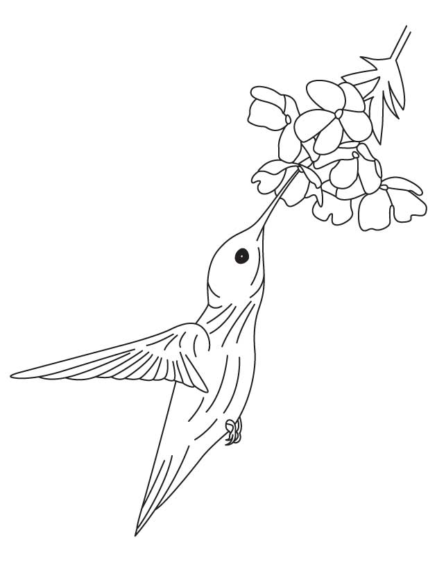hummingbird and flower drawing at getdrawings com free bing clip art free christmas bing clip art free library