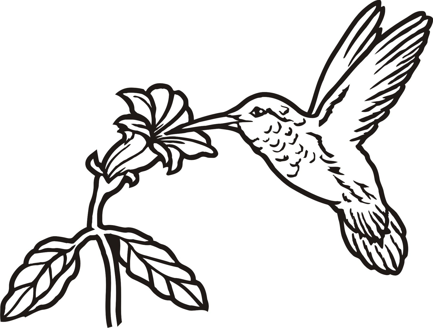 1837x1390 Images For Gt Simple Hummingbird Drawing Birds, Animals