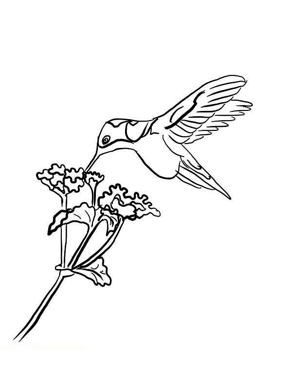 Hummingbird And Flower Drawing at GetDrawings.com | Free for ...