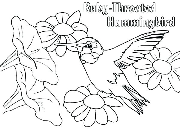 600x445 Coloring Pages Of Hummingbirds